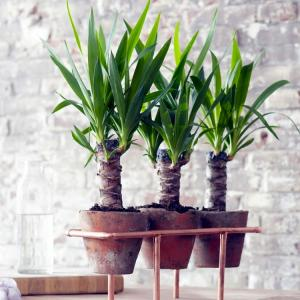 House & Office Plants
