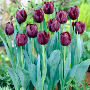 Buy Garden Plants online for the Garden from Gardening Express