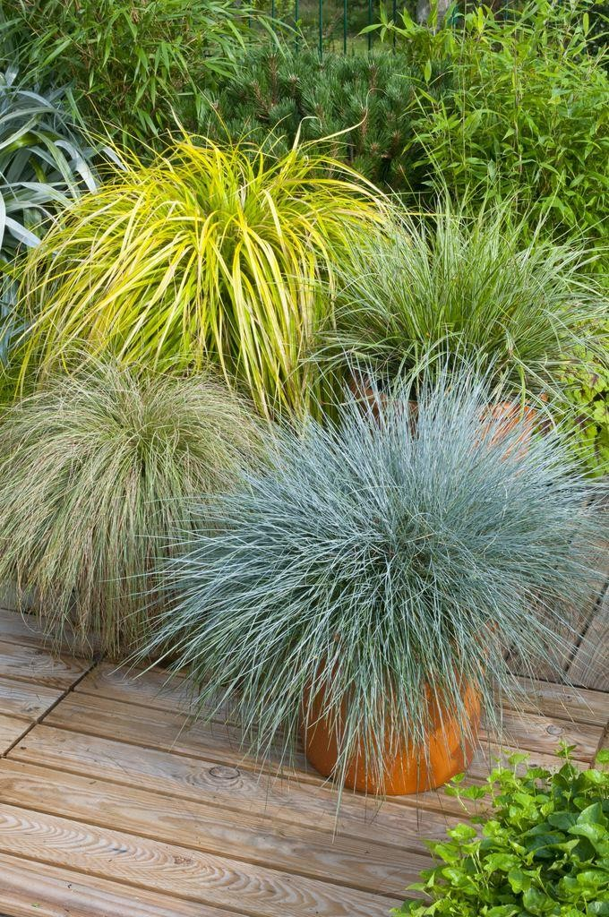 Gorgeous grass pack of 10 amazing ornamental grasses for Decorative grasses