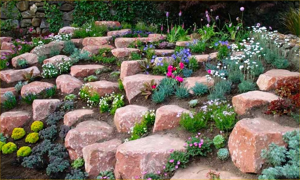 Alpine plant collection pack of 10 alpine rockery plants for Planting a garden