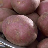 Maxine - Main Crop Seed Potatoes - Pack of 10