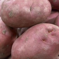 Desiree - Main Crop Seed Potatoes - Pack of 10