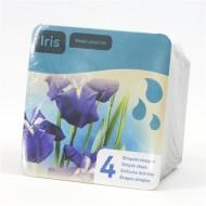 Complete Water Plant Pond Kit - Blue Iris