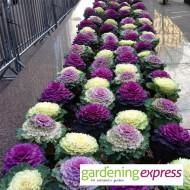 NEW! Gardening Express Gift Card £100.00