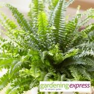 NEW! Gardening Express Gift Card £15.00