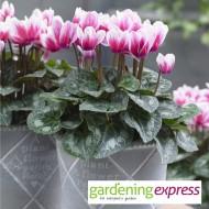 NEW! Gardening Express Gift Card £20.00