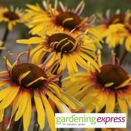 NEW! Gardening Express Gift Card £25.00