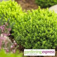 NEW! Gardening Express Gift Card £30.00