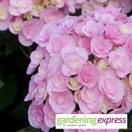 NEW! Gardening Express Gift Card £50.00