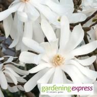 NEW! Gardening Express Gift Card £75.00