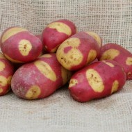 Mayan Rose - Main Crop Seed Potatoes - Pack of 10