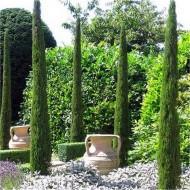 Pair of Van Gogh Tuscan Totem Pole Cypress Trees - Cupressus sempervirens 120-150cms