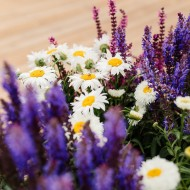 SPECIAL DEAL - TEN Established INSTANT IMPACT Cottage Garden Plants -Hardy Perennials Perfect for Beds and Borders
