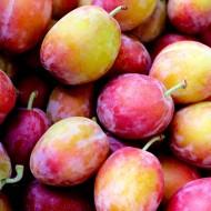 Plum - Prunus Domestica Victoria - Patio Pillar Fruit Tree