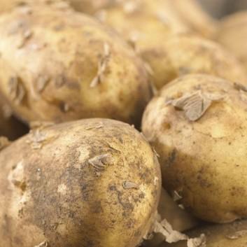 Maris Piper - Main Crop Seed Potatoes - Pack of 10