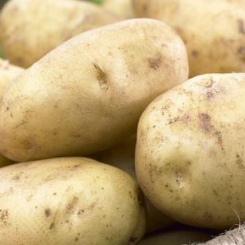 Maris Peer - 2nd Early Seed Potatoes - Pack of 10