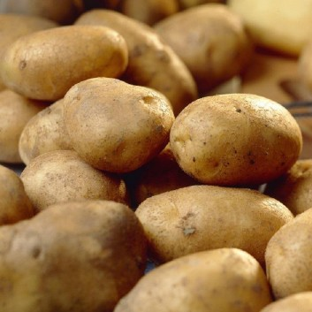 SPECIAL SPUD DEAL - Seed Potatoes 10 packs of 5, all different varieties