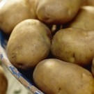Estima - 2nd Early Seed Potatoes - Pack of 10