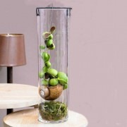 Unusual 'Snaily' Dischidia Plant in Contemporary Cylinder Vase