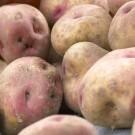 Kestrel - 2nd Early Seed Potatoes - Pack of 10