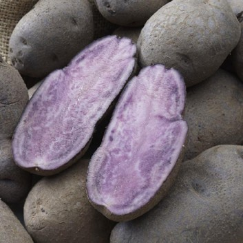 Shetland Black - Novelty Heritage Seed Potatoes - Pack of 10