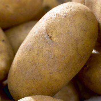 Best Salad Potatoes Collection - 5 Different Varieties