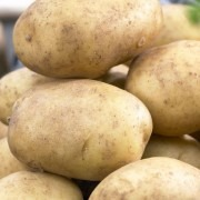 Pentland Javelin - 1st Early Seed Potatoes - Pack of 10