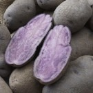Rare Heritage Heirloom Potatoes Collection