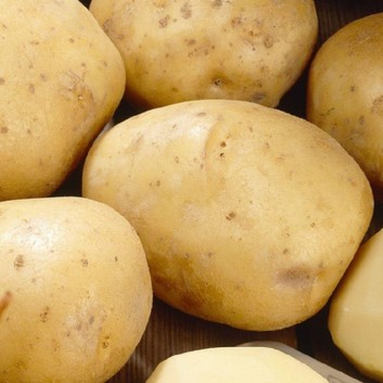 British Queen - 2nd Early Seed Potatoes - Pack of 10