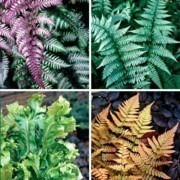 Fantastic Fern Collection - 5 Different Plants