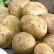 Home Guard - 1st Early Seed Potatoes - Pack of 10