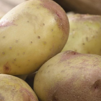 King Edward - Main Crop Seed Potatoes - Pack of 10