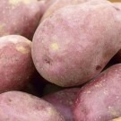 Kerrs Pink - Main Crop Seed Potatoes - Pack of 10
