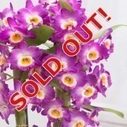 MOTHERS DAY - Noble PINK Tower Orchid - Premium Quality
