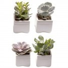Succulent Plant Collection in Contemporary White Ceramic Cube Planters