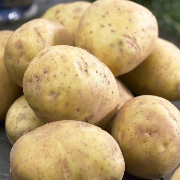 Arran Pilot - 1st Early Seed Potatoes - Pack of 10