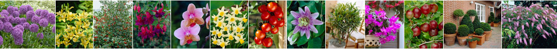 Gardening Express - Montage Strip 1